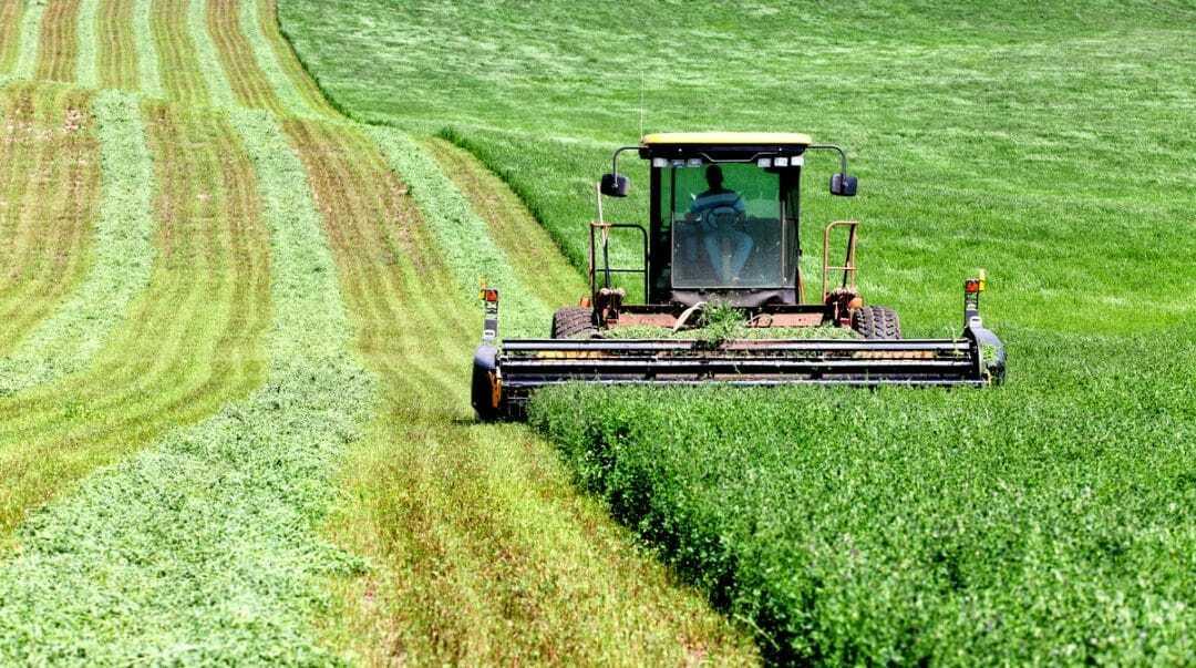 Máquina agrícola colhendo alfafa