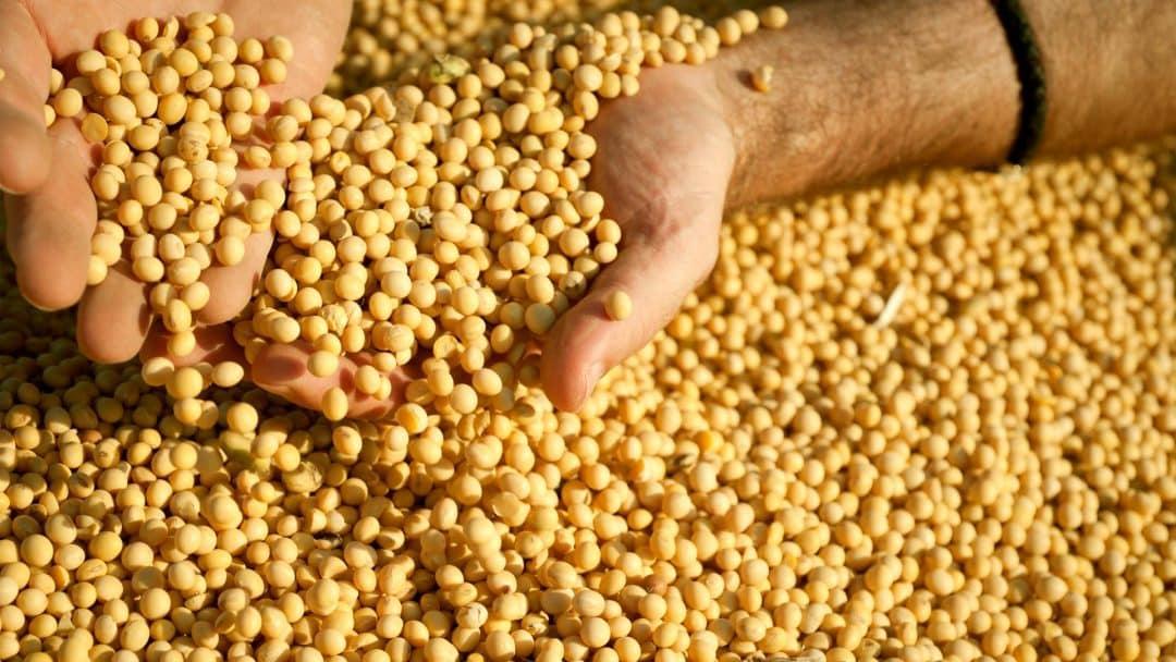 Soja é destaque na colheita do Tocantins