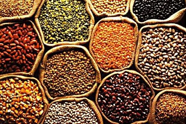 Diversos grãos em sacaria com boca aberta