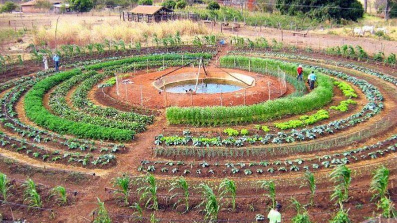 DIA MUNDIAL DA ÁGUA – Sistema Agropecuário Inovador tem água como elemento central