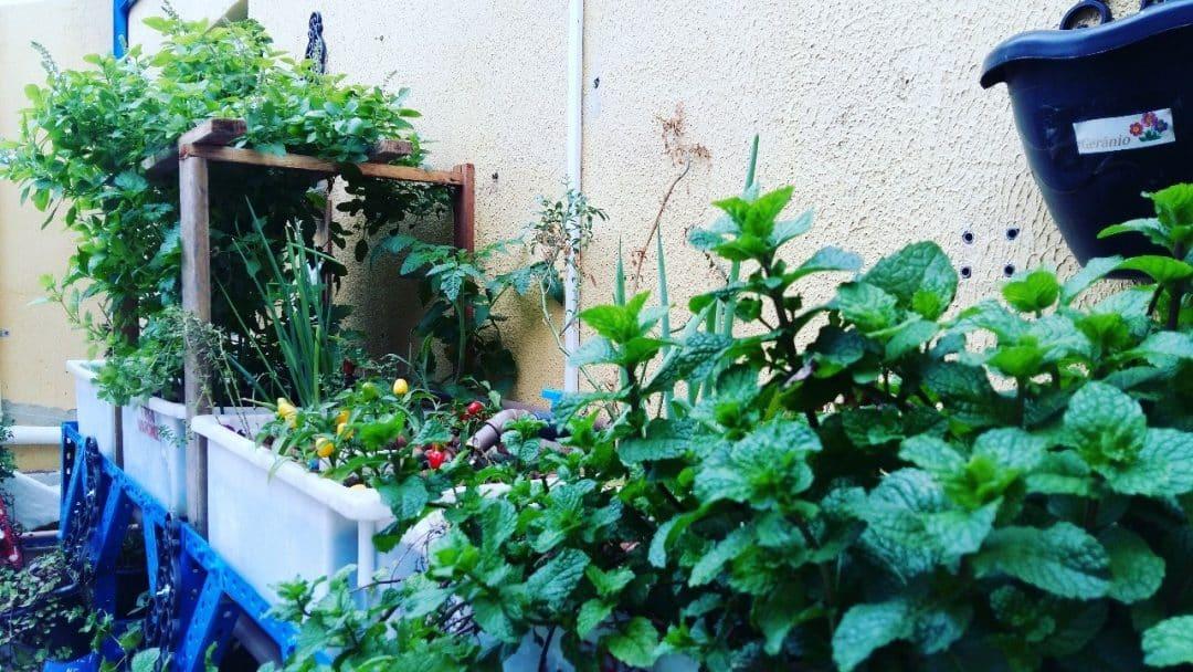 Plantas produzidas na aquaponia