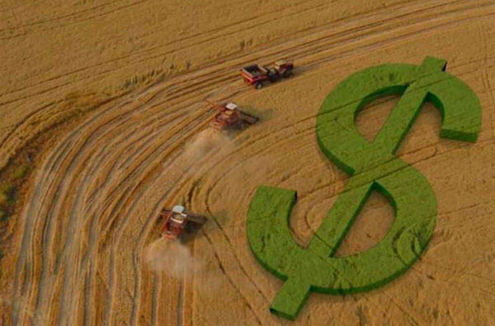 Agronegócio no Centro-Oeste: conheça sua importância e os principais produtos