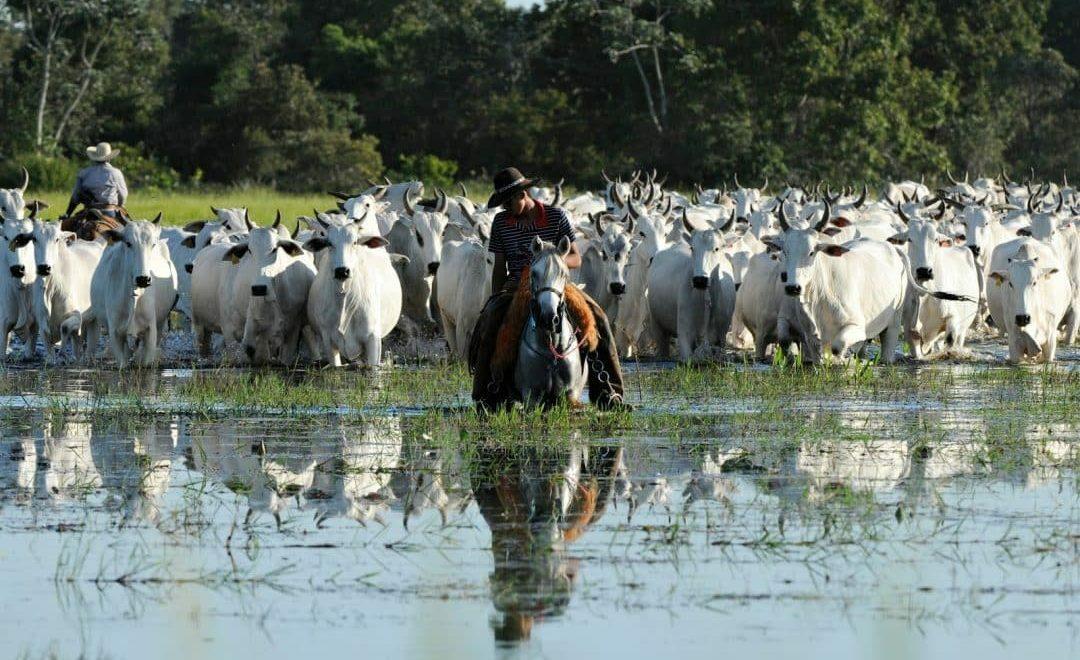 Pecuária no Brasil: mesmo com crise, setor permanece estratégico e fonte de bons negócios