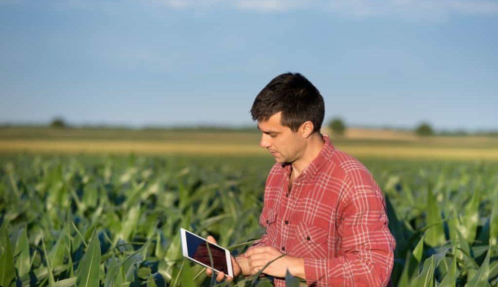 Agrônomo com ipad em meio a plantação de milho
