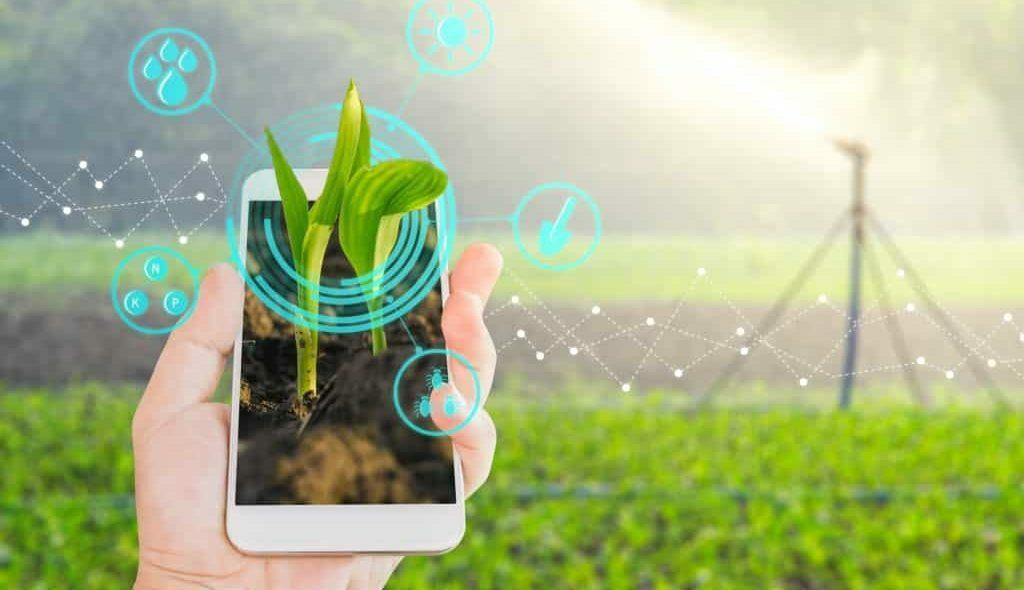 Agrônomo segurando celular com campo irrigado ao fundo