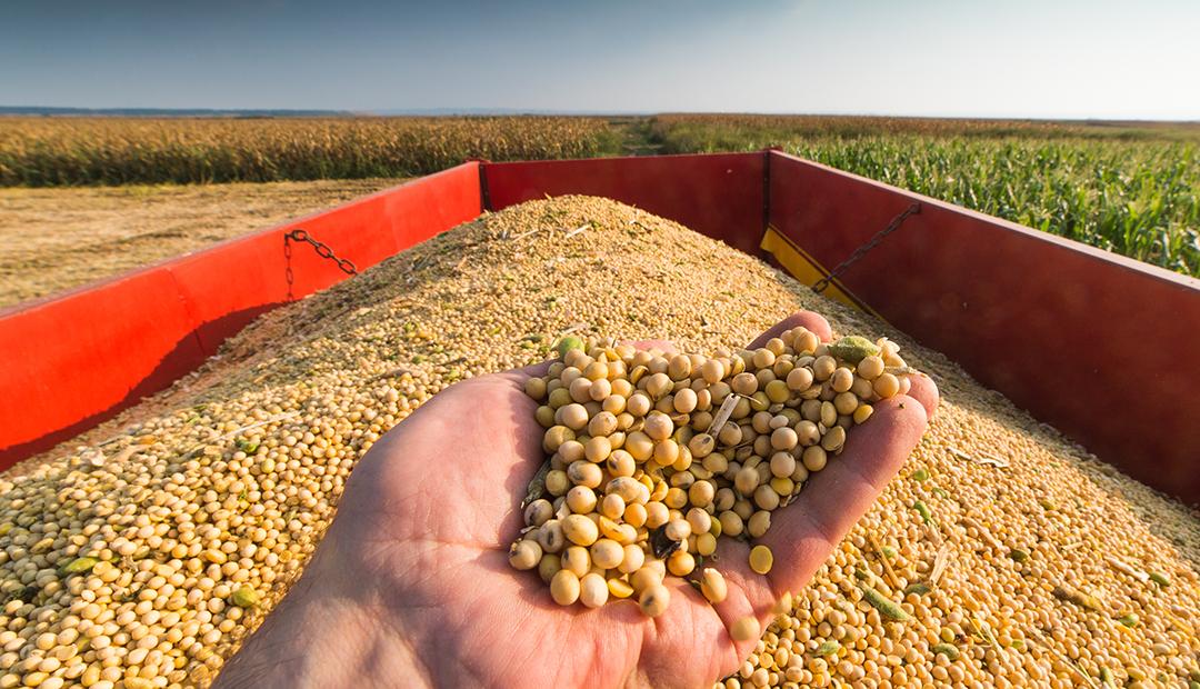 Debater a agricultura brasileira ajuda a transformar desafios e necessidades em oportunidades