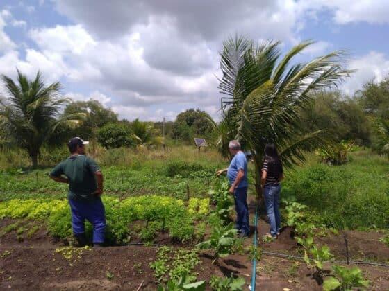 Agricultor usa energia solar em irrigação