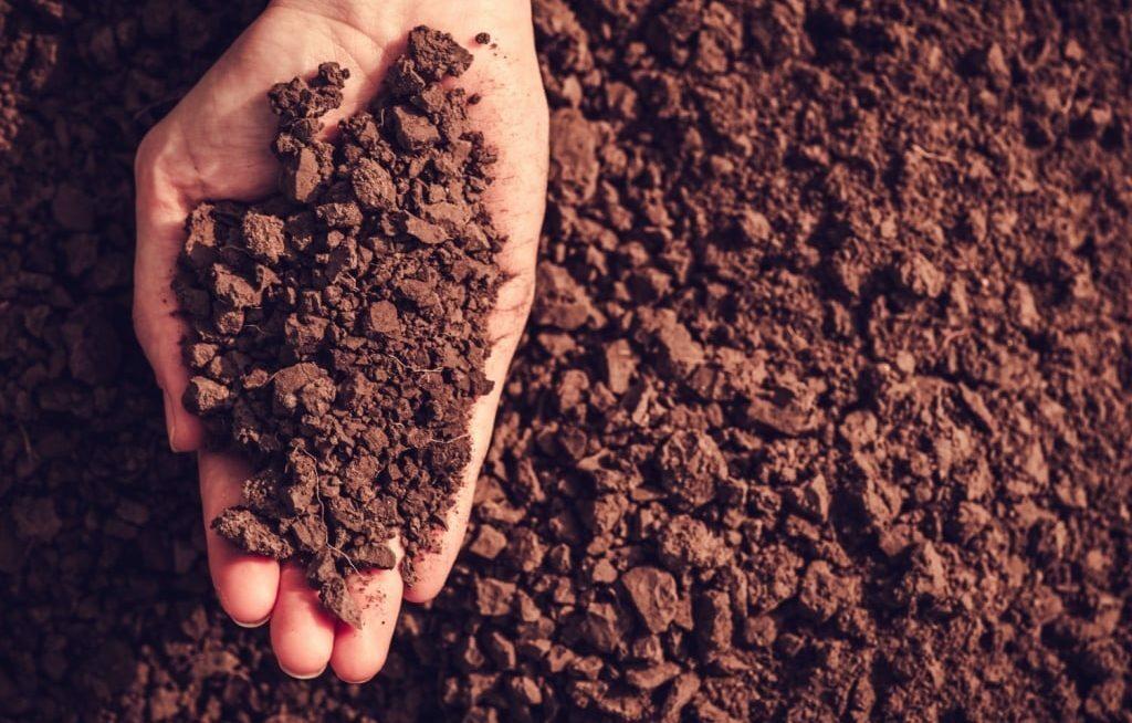Preparo do solo: Técnicas para um plantio eficiente.