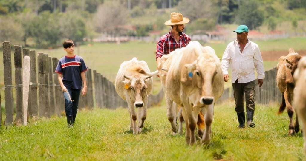 Família de agricultores tocando o gado