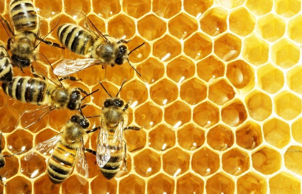 5 dicas de técnicas de manejo para produção de mel
