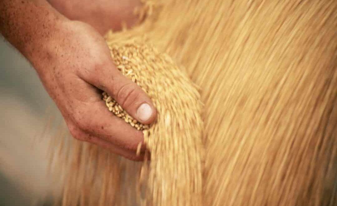 Compra e venda de grãos: entenda por que o mercado está favorável