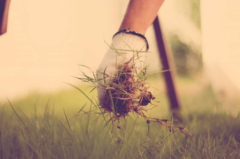 5 dicas para manejo de plantas daninhas