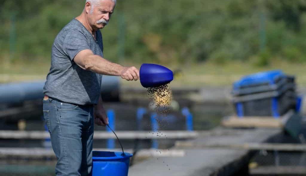 Homem jogando ração para tilápias