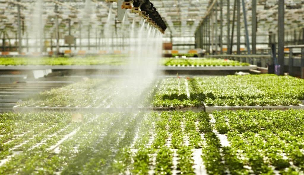Irrigação mecanizada em sistema de hidroponia