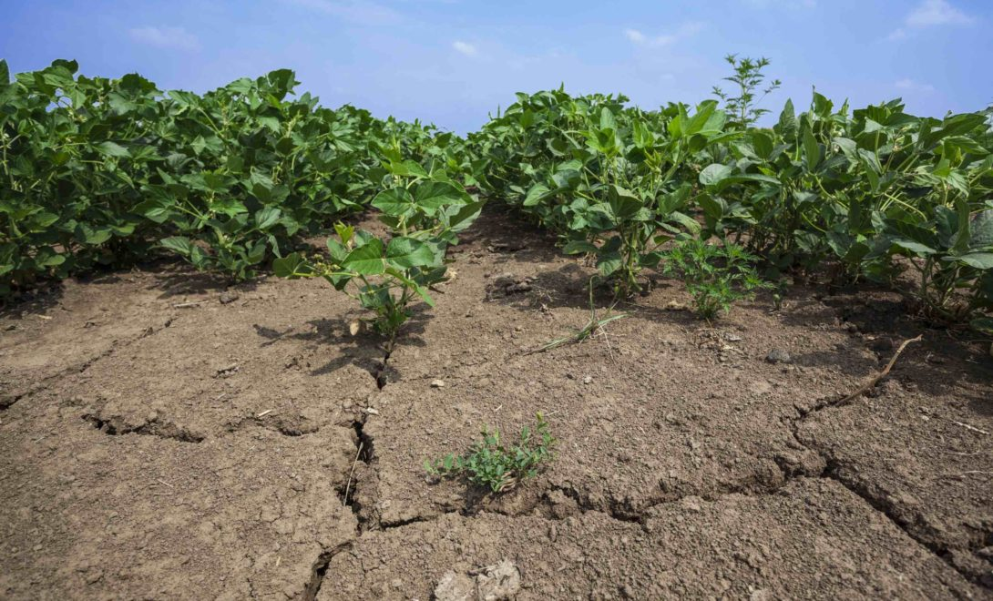 Como aumentar a produtividade da soja por hectare?