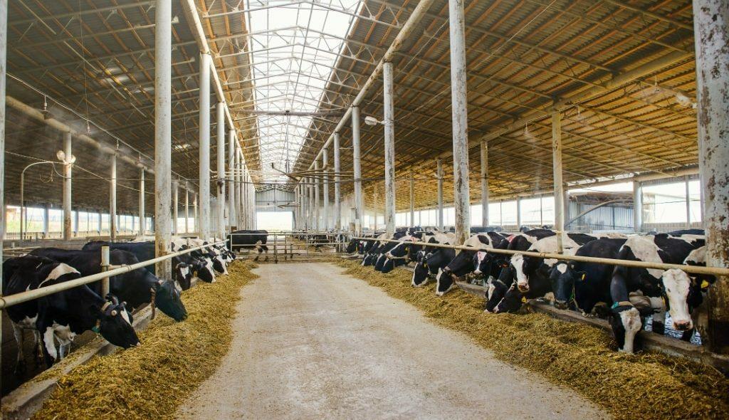 Sistema de pecuária leiteira em ambiente confortável