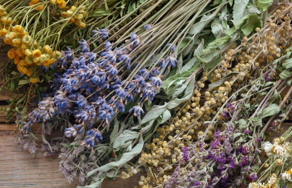 Plantas medicinais: O que são e como cultivar