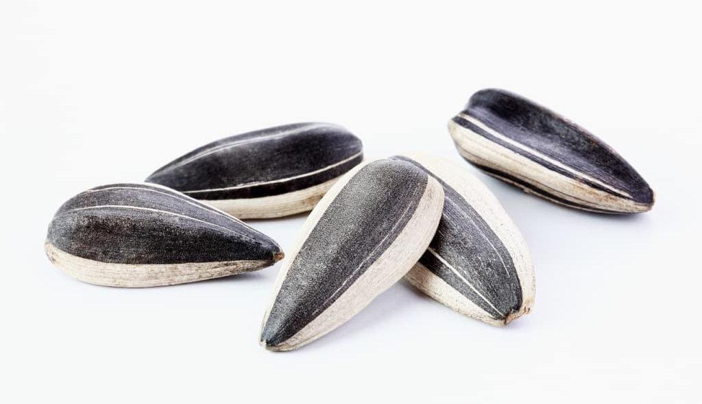 5 sementes de girassol em alta resolução
