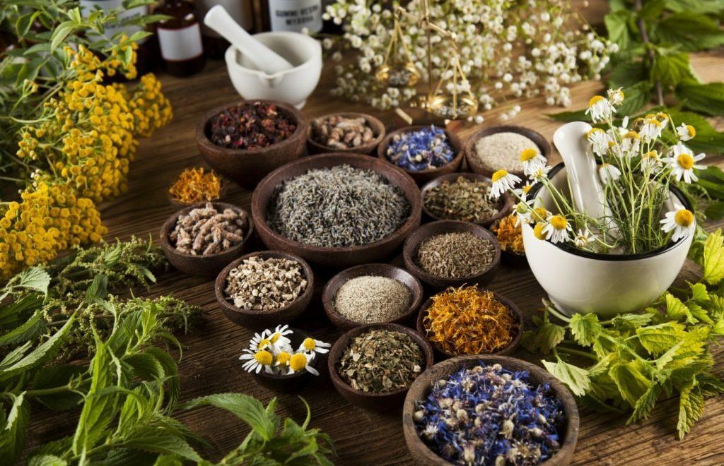 Tempos difíceis? Conheça 8 plantas medicinais que acalmam e reduzem stress