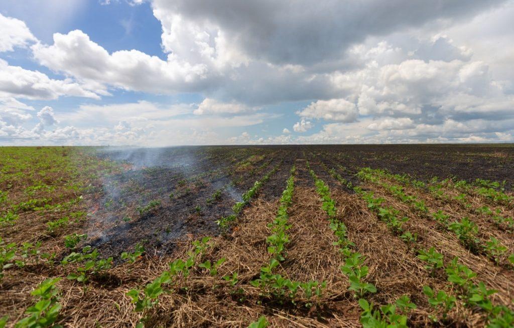 Fogo em plantação de plantio direto