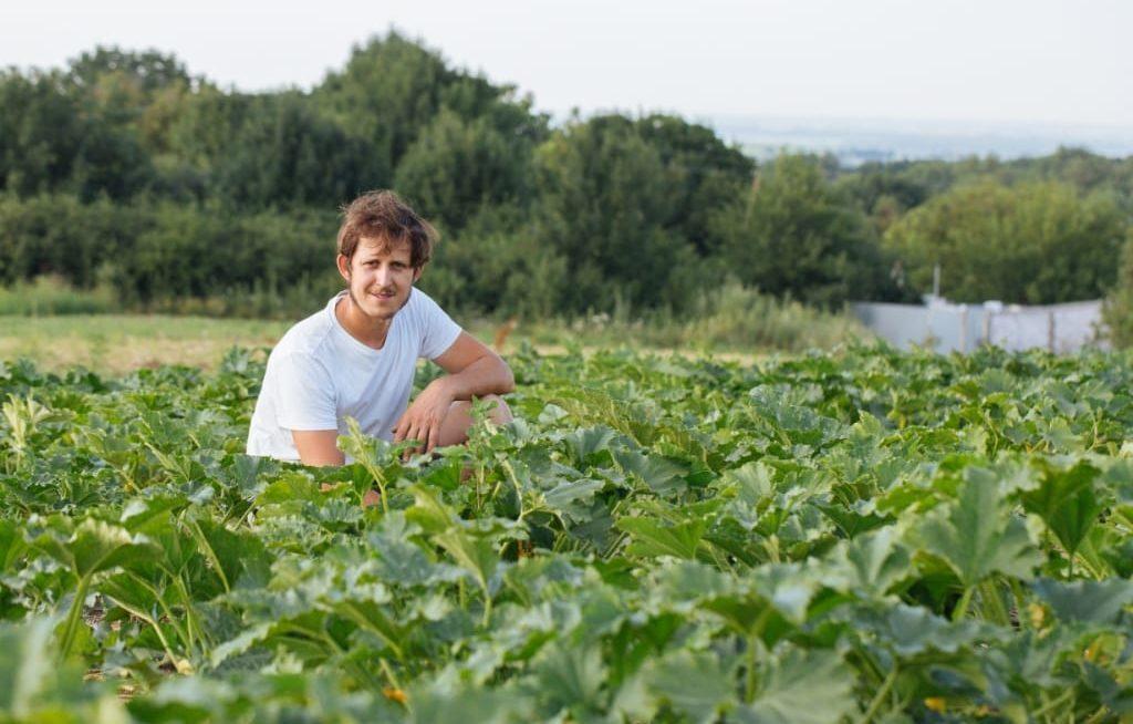 Importância das hortaliças na agricultura familiar
