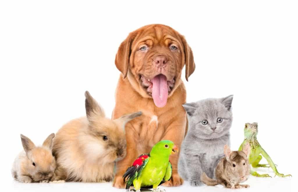 Conheça os animais que podem ser criados em casa