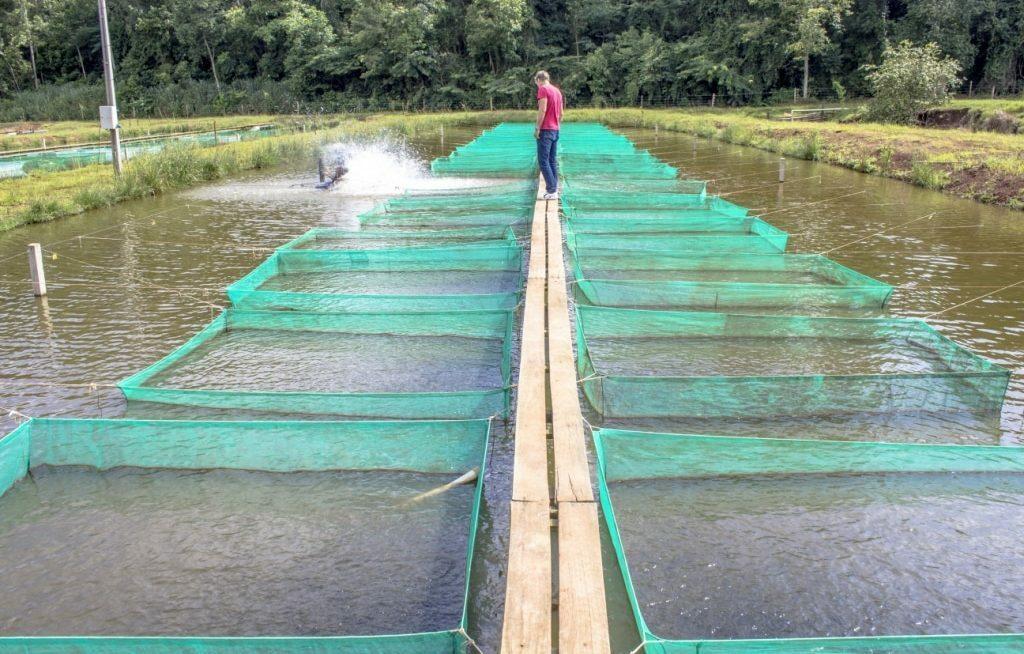 Vários tanques rede para criação de camarão