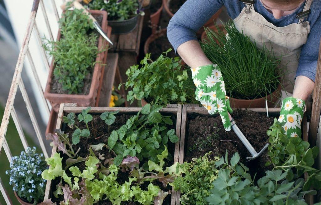 Mulher trabalhando em horta na sacada, vários vasos