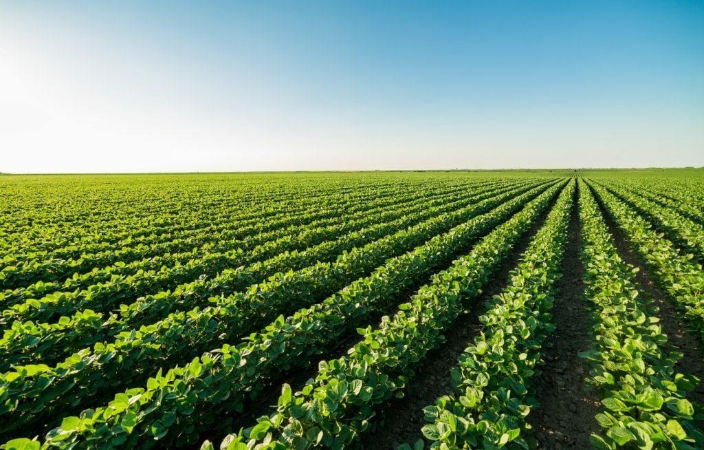 Extensa plantação de soja