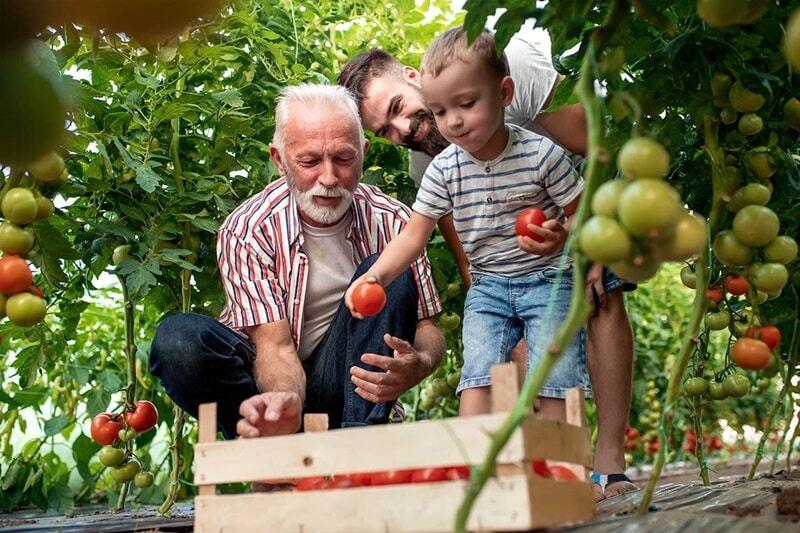 Confira os principais programas governamentais de incentivo à agricultura familiar