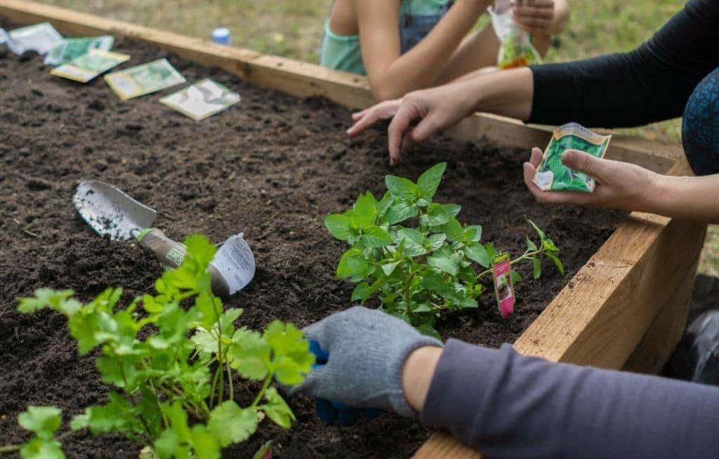 Família plantando sementes e mudas em canteiro de horta