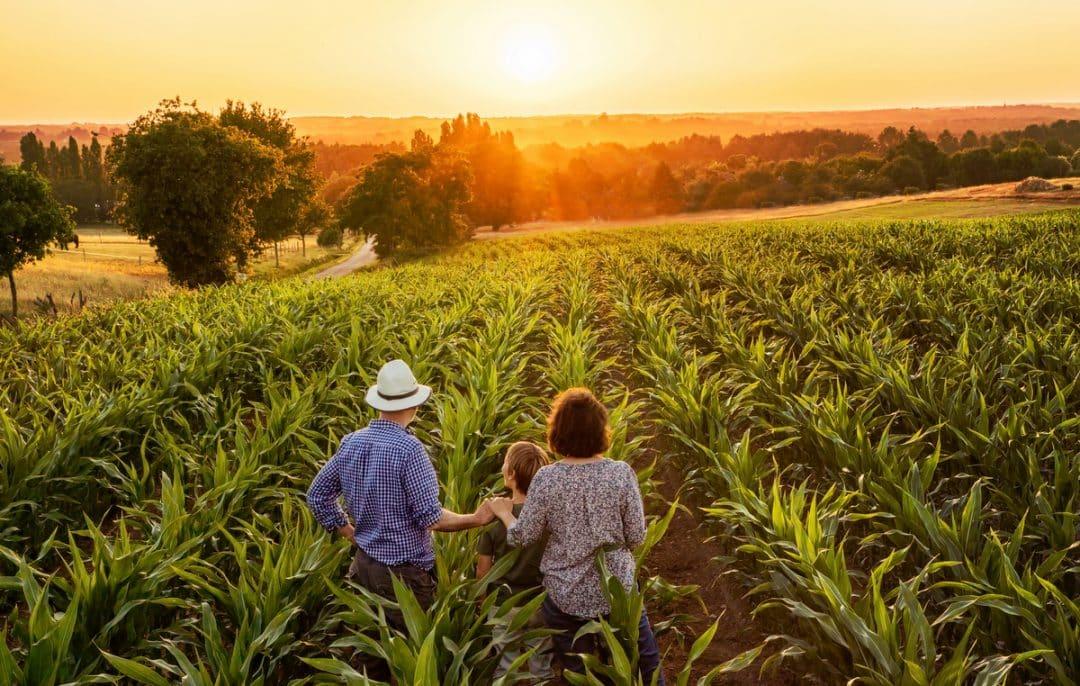 família olhando plantação no por do sol