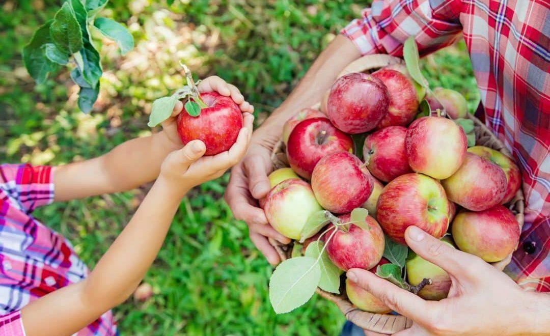 Frutas como fonte de renda para agricultura familiar
