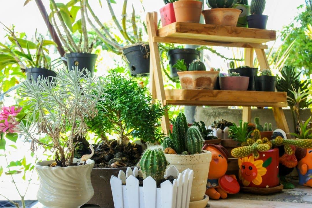 Vasos com cactos plantados e decoração