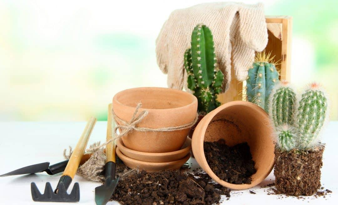 Vasos de cerâmica, substrato e plantas