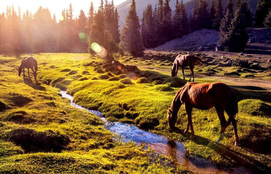 Cavalos pastando e bebendo água