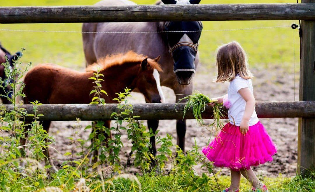 Criança alimentando cavalos