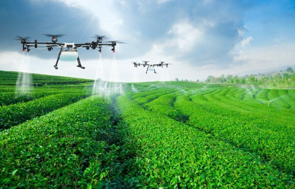Vários drones pulverizando a lavoura
