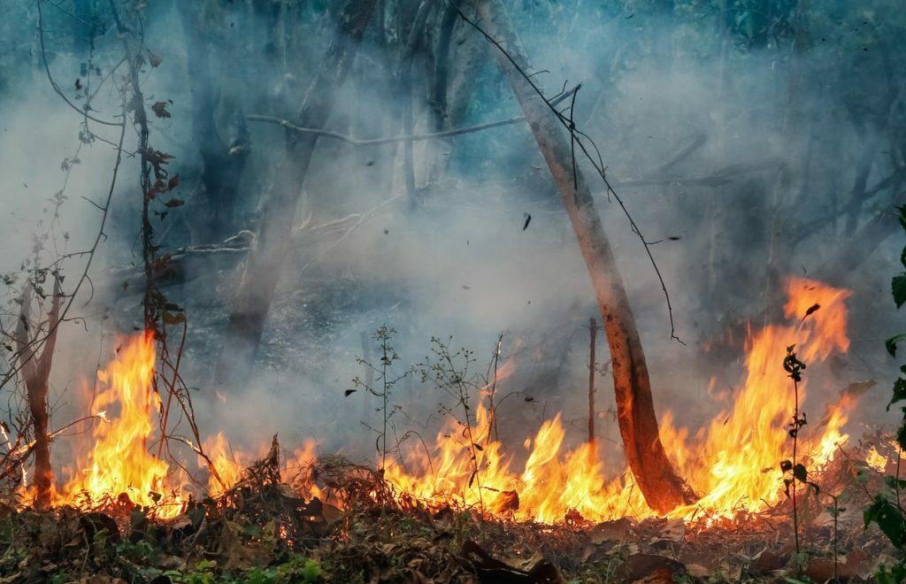 Com estiagem, produtor deve ficar atento às queimadas