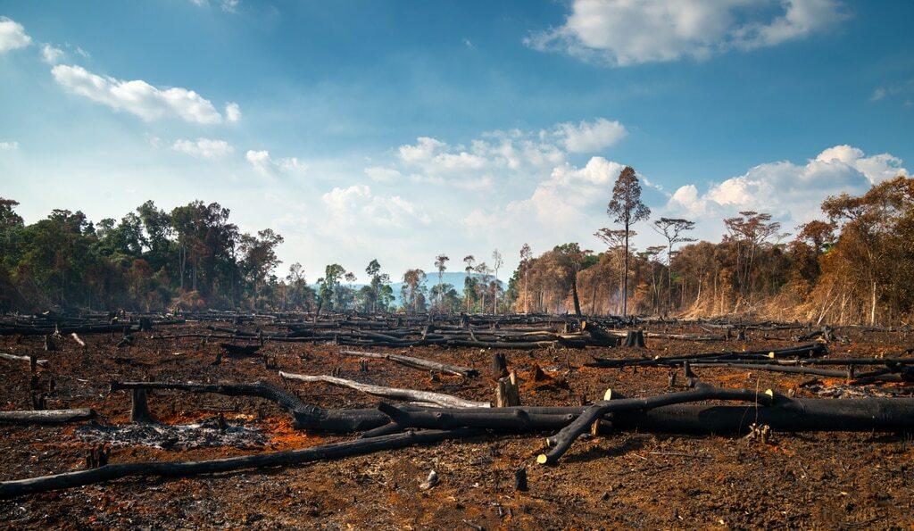 Árvores destruídas por queimadas