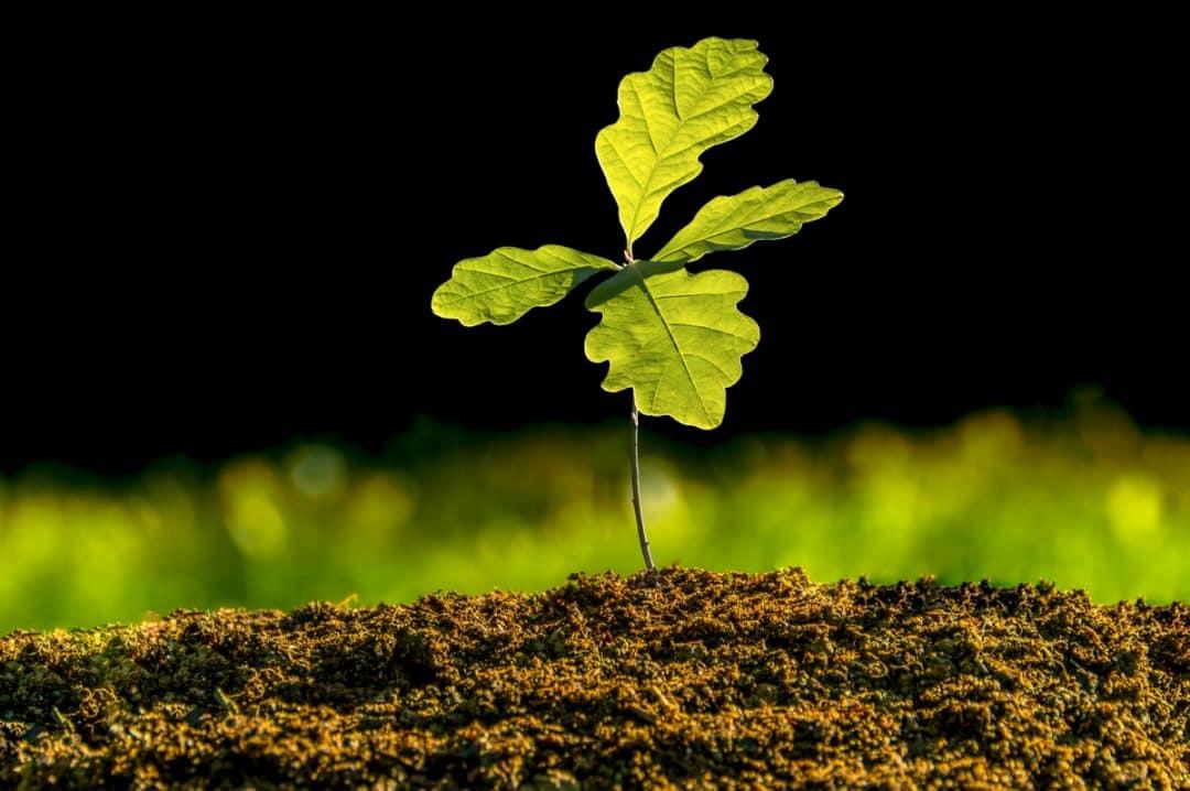 Muda de planta germinada em solo com substrato