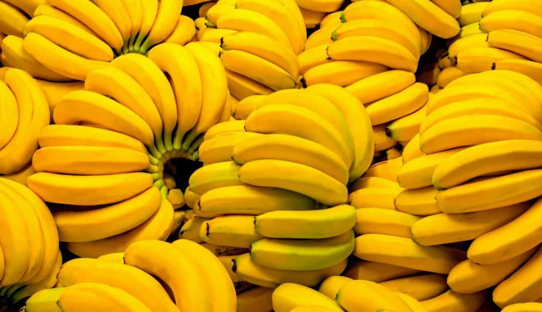 Cachos de bananas maduras