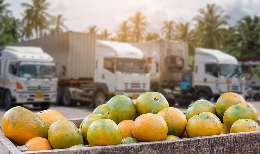 Qual o melhor caminhão para o transporte no setor agropecuário?