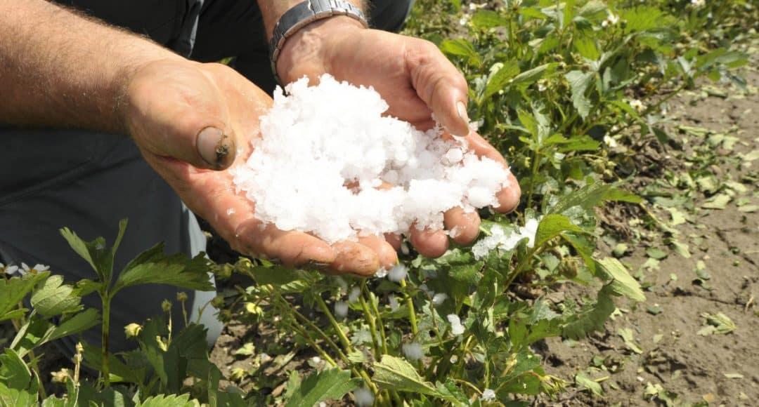 Homem mostra granizo com as mãos