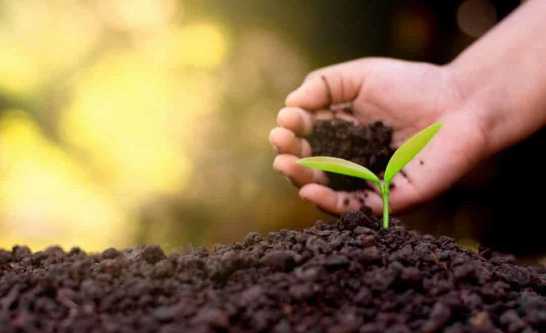 Agricultores contam com análise biológica do solo