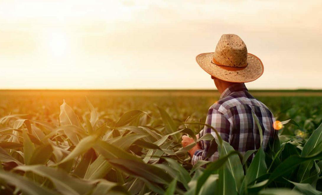 Empreendedorismo na fazenda: confira algumas dicas para melhores resultados