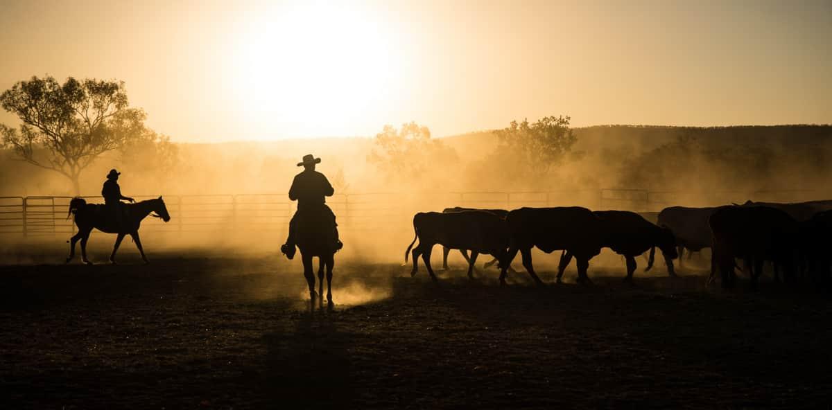 Vaqueiros com rebanho em piquete com por do sol