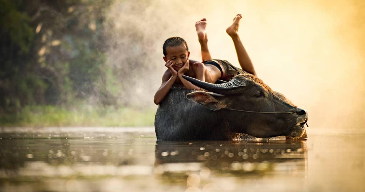 Criança brincando no lombo de um búfalo dentro de um riacho