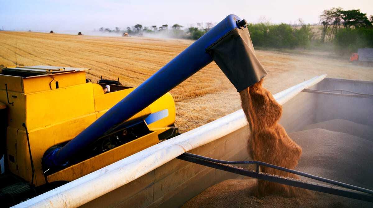 Máquina colhendo safra de trigo