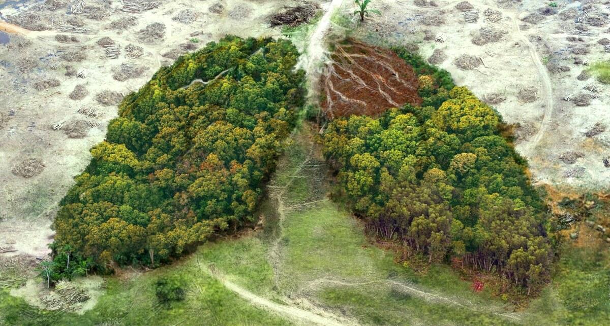 """Área de desmatamento que forma uma espécie de """"pulmão"""""""